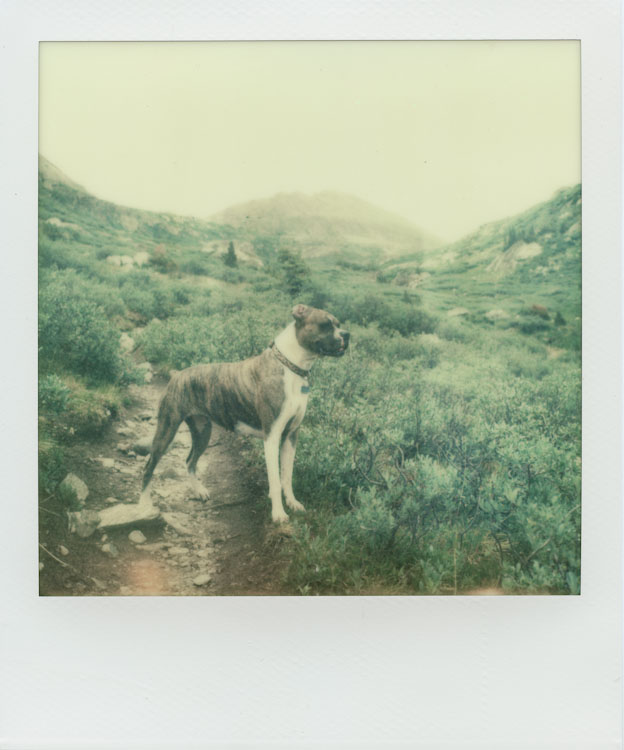 Maybelle on the Lost Man Trail - Impossible Project PX-70 COOL