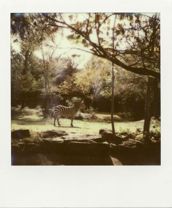 PolaWalk at the Zoo - Impossible Project PX-680 CP - Polaroid SLR680